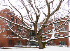 Lewis Wide Angle Ortho (Wolfram Burner) Tags: uoregon university oregon universityoforegon college campus school snow snowstorm storm eugene willamette valley lane county wolfram burner weather inclement