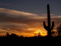 Saguaro and Sun Emerging.jpg (melissaenderle) Tags: sky desert cactus arizona