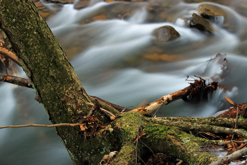 The world 39 s best photos of rocks and trunk flickr hive mind for Fish branch tree farm