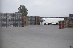 Árbol transgenealógico. (elojeador) Tags: camión trailer palé madera plástico caja explanada árbol eucalipto alquitrán asfalto anchurón cooperativa cooperativaagricolasanisidro casi lospartidores sarabia enfamilia elojeador