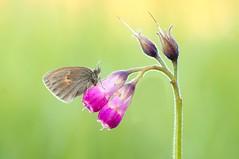 Little Magic... (Zbyszek Walkiewicz) Tags: butterflies butterfly sony closeup