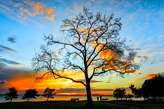 Sunset (KPortin) Tags: sunset trees photographer benches centennialpark seattle waterfront elliottbay