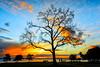 Sunset (KPortin) Tags: sunset trees photographer benches centennialpark seattle waterfront elliottbay