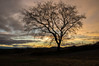 """Joy in looking and comprehending is nature's most beautiful gift."" - Albert Einstein (Tom Frundle) Tags: pentax pentaxian pentaxk3 da165028 nolensville nolensvilletn morning sun sunrise winter 2017 january middletennessee middletn rural rsarural rurallife sky beautiful tree landscape life quote"
