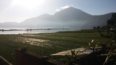 Lake Batur from Batur Bagus Cottage (scinta1) Tags: bali baturbaguscottage beautiful kintamani kedisan kampung keluarga agama hindu lakebatur danaubatur desa mountbatur mountain gunungbatur giri amazing awesome caldera excellent indonesia lake view water waterscape misty haze