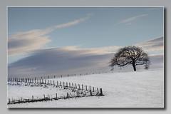 Tree in a Winter Field   Explored (Bill McKenzie / bmphoto) Tags: tree thornhill stirlingshire rural snow snowscene s
