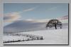 Tree in a Winter Field......Explored 15012017  #191 (Bill McKenzie / bmphoto) Tags: tree thornhill stirlingshire rural snow snowscene s