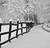 Winter idyll (Sappho et amicae) Tags: winter path fence landscape sapphoetamicae željkagavrlović canon450d