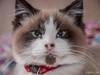 («Dea») Tags: cat kitty miau meow gato animal animals