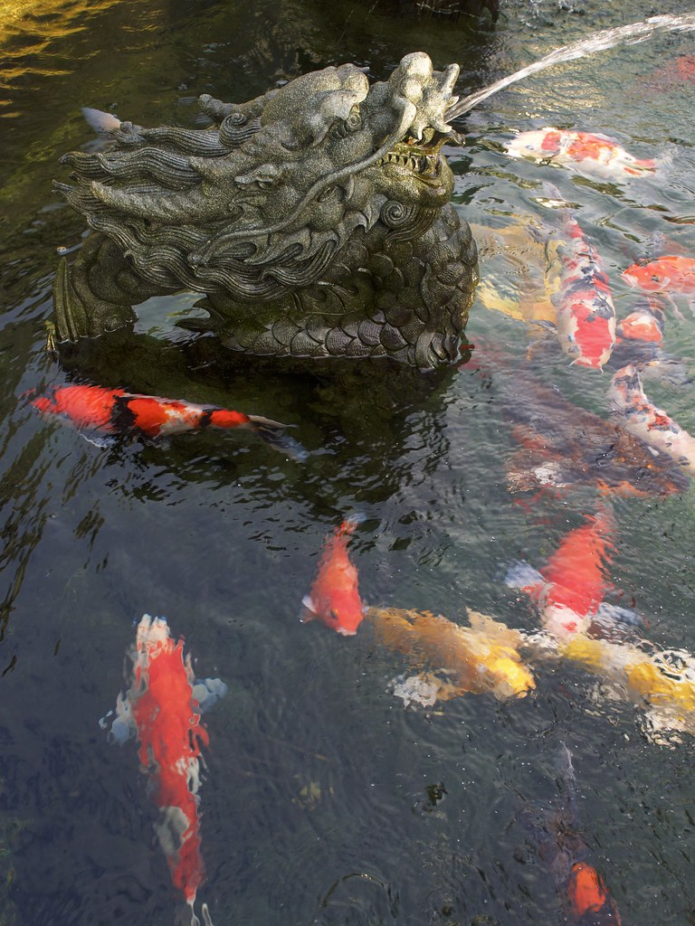 The world 39 s most recently posted photos of happy and for Chinese koi pond