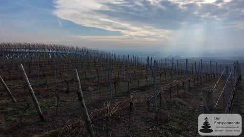 Weinberge bei Zornheim