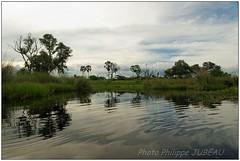 DSC08680PJ_XNV (http://phj.bookfoto.com/) Tags: botswana afrique okavango philippe jubeau delta