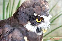 (61) Liberty's Owl Raptor & Reptile Centre