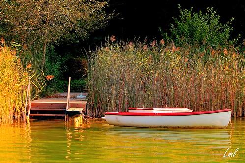 Uferbereich in Auen am Wörthersee