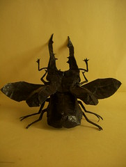Cyclommatus Metallifer (Marcos Origami) Tags: bugs origami beetle insects w
