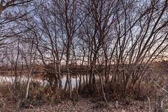 4176-2016-BR (elfer) Tags: paisaje puestasdesol bosques lagunas otoã±o horaazul