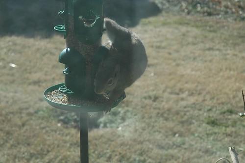 Bad Squirrel!