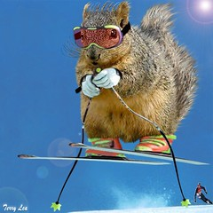 Extreme Skier (Terry_Lea) Tags: squirrel squirrels photoshopfun tbas