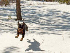 Super Rotty (iJohn) Tags: tag3 taggedout tag2 tag1