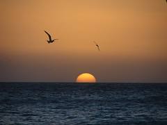 Birds and Sun (Alexander Yates) Tags: ocean travel sunset vacation bird beach nature birds topv111 ilovenature island aruba tropical writer caribbean novelist 25faves fivestarsgallery travelwriter alexanderyates
