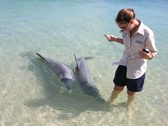 Australia.2004-10-25.0045 (DigitalTribes) Tags: 2004 au australia worldheritagesite dolphins westernaustralia dt monkeymia sharkbay digitaltribes markoneil