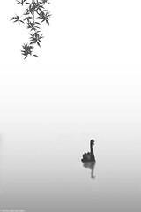 Beauty of Water (naimocean) Tags: tariqmahmudnaim conceptualmanipulation swan blackwhite beauty leaf