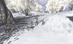 """""""They never let poor Rudolph join in any reindeer games."""" (LoneSolitarian) Tags: second life secondlife sl virtual dark light shadow art firestorm gimp photography windlight photo sim 3d nature landscape scenery beauty romance serene winter snow reindeer rudolph christmas xmas frisland"""