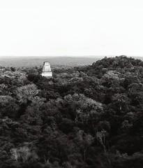 Tikal   - Petn  - Guatemala (amos.locati) Tags: tikal guatemala peten central america centro rovine maya piramide giungla foresta amos locati black white forest jungle blanco negro alb negru blanc noir forete trees