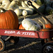 pumpkins take a ride on the radio flyer