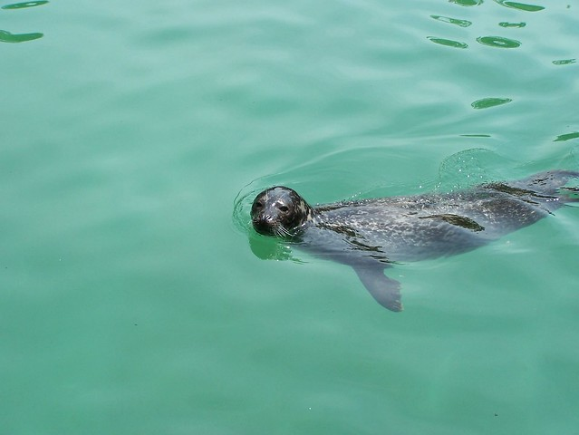 Nice Swim