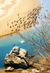 Chapuzn (WakamouL) Tags: tree water rio river mexico arbol agua stones pelican nayarit guacamole rocas gp pelicano ltytrx5 ltytr2 ltytr1 puntacustodio gpcompaisajes fltytrx5