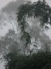 Mysty Morning (Yorick...) Tags: forest thailand albaluminis vert mai jungle chiang yorick chiangrai lahu 0x626665