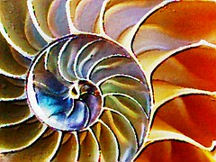 Nautilus Shell Photograph (Artsy) (Pixel Packing Mama) Tags: beautiful tag3 taggedout catchycolors wonder you lovely1 gorgeous paintings shell like loveit artsy artsyset photographicart imagemanipulations photographlikepainting femalephotographers nautilusshell 2000views verycool likeapaintingpool pixelpackingmama taggedoutthegraduatesofletsplaytag dorothydelinaporter favorites15 worldsfavorite mavicafanclub taggedoutproudofitset beautifuluniverse photographlikeart wonderfulunlimited 20commentsandup bonzag arteyeofthebeholder favoritedpixset mostinterestingaccordingtoflickralgorithmset greatpixgallery10favespool favorites10pool itsmulticoloredpool thegameofphotoassociationpool reallyunlimitedpool 1025favouritespool allthingsmacropool uploadedtoflickr2005set multicoloredmiscellaneousset ifyoulikepaintings~membershipbyinvitation~pool pixelpackingmama~prayforkyronhorman ~membership fix0531114277v22c14f oversixmillionaggregateviews over430000photostreamviews