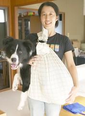 Dog sling (timtak) Tags: dog pet baby andy pouch sling hammock hip sack sick carry myastheniagravis rebozo dogholders