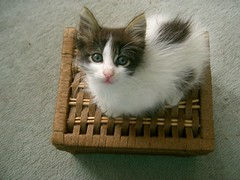 (Marchnwe) Tags: kitten