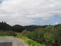 The View from Iron Horse (lauchlinmac) Tags: view ironhorse winery honeymoon