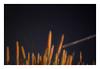 my astronomical youth (G r e n) Tags: arizona topv111 nikon nightshot d70 lemonstolemonade gren ilikegrass ©bettyschlueter bettyschlueter