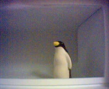 Freezer Penguin