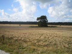 National Park de Hoge Veluwe (john_and_erin_rogers) Tags: nationalparkdehogeveluwe nationalpark park apeldoorn netherlands