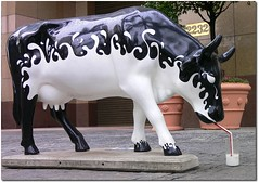 Vaca Leiteira (.Ta