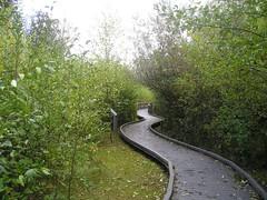 Narbeck Boardwalk