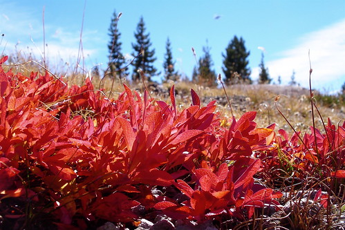 Red leaves on the way to Broken Top by alumroot