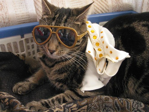 King Kitty -- cat elvis costume tabby king family theking moggie glasses kitty