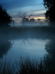 Light and Dark (Kevin Day) Tags: uk england mist lake tree 1025fav 510fav sunrise dawn deadtree slough berkshire kevday langleypark chtk
