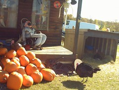 Haunted Turkeys (pirate johnny) Tags: pumpkins turkey turkeys deadguy porch hauntedhouse twincities halloween pumpkinfarm