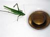 ¿Intruso? (Lou Rouge) Tags: mexico ilovenature insects palenque top20macro chiapas lourouge mc05negativespace