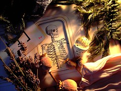Spelling (mohawk) Tags: life light red copyright art love look liverpool paper skeleton photography book see photo still scary photographer shadows arte d kunst lavender seed s sean spooky mount fabric haloween shade frame poppy surprise horror mohawk string treat trick witchcraft 2009 binding 08 wirral magie veiw magia     limbert mgica magisch