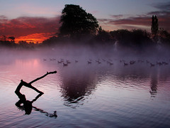 Canada Geese (Kevin Day) Tags: uk england mist lake dawn geese quality buckinghamshire slough berkshire kevday langleypark