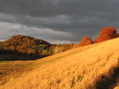 Golden hillside in Wisconsin