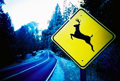 run bamby run (lomokev) Tags: california road yellow nationalpark lomo lca xpro lomography crossprocessed xprocess graphic roadtrip lomolca yosemite yosemitenationalpark dear agfa jessops100asaslidefilm top20lomo agfaprecisa bamby lomograph greentortoise agfaprecisa100 cruzando top20xpro sige precisa jessopsslidefilm onlomohome file:name=sf2005klomo026 rota:type=landscape rota:type=showall rota:type=lowlight rota:type=stilllife